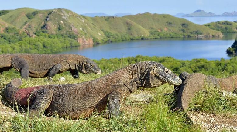 Rekomendasi Kegiatan yang Wajib Kalian Lakukan Saat Wisata ke Pulau Komodo