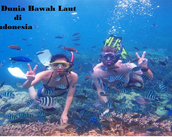 3 Wisata Dunia Bawah Laut di Indonesia Yang Mendunia