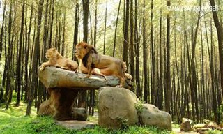 Taman Safari Indonesia (Prigen)