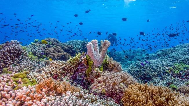 Tubbatana Reef