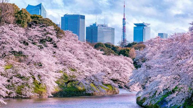 Taman Chidorigachuki